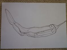 pepper plan section pencil drawings - Google Search