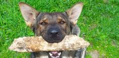 Getting A Professional Trainer - http://how-to-train-a-dog.com/dog-training/