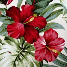 Fabric, Red Hibiscus Floral on Cream, Tropical Hawaii, Bird of Paradise Flower…