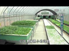 魚菜共生系統-慈濟-大愛探索周報-留水年華-20140516 - YouTube