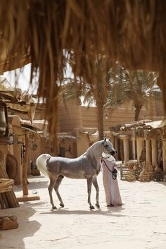 Arabian stallion Phaaros