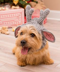 """Your dear doggie friend actually becomes a """"deer"""" in this clever snood. It's the perfect crocheted wearable for taking a memorable holiday photo! We've included four sizes to fit a range of pets."""