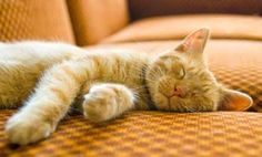How Much Do Cats Sleep? | Care2 Healthy Living