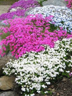Outdoor Gardens, Patio, Diy, Gardening, Dreams, Plants, Do It Yourself, Yard, Bricolage