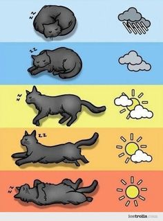 #Meteo for #cats