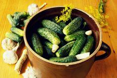 http://www.dreamstime.com/royalty-free-stock-image-preparing-sour-cucumbers-image10025556