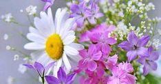 Temiz bir kabın içerisine yine temiz olan bir miktar su koyun, suyun içerisine sağ işaret parmağınızı batırarak niyetinizi edin. Niyet... Elegant Flowers, Flower Pictures, Daisy, Pretty, Plants, Allah, Cottage, Country, Twitter