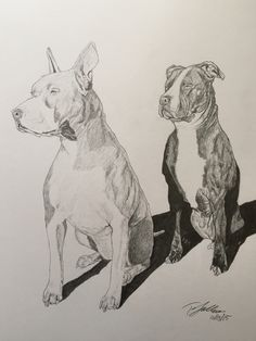 #commission #sulbone #dog #dogs #pitbull #art #artist #draw #drawing #sketch #sketchbook #pencil