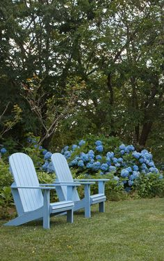 So inviting! Blue hydrangea macrophylla in the garden with blue Adirondack chairs.