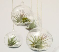 Plants hanging from the ceiling. Good idea to decorate the bathroom