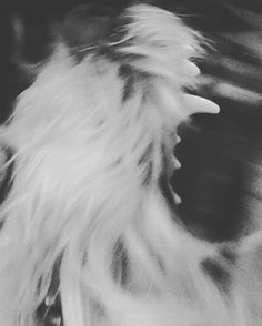 Pella the labradoodle