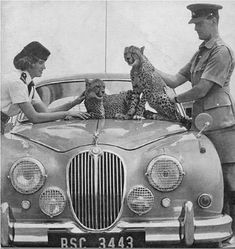 How about a 'period' classics pictures thread – Page 283 – Classic Cars and Yesterday's Heroes – PistonHeads Vintage Cars, Antique Cars, Jaguar S Type, Jaguar Cars, Old Lorries, Automobile, Military Photos, E Type, Back In The Day