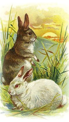 two bunnies watch sunrise