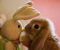 einfach tirisch witzig | Tierbilder - Lustige Tierfotos und witzige Tier Bilder