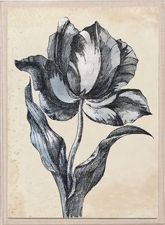 Sieger Tulips, Silverleaf 2 in Acrylic | Natural Curiosities