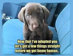 Now that I've adopted you, let's a few things straight before we get home, human.