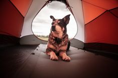 """Best Dog Camping Tents"" #doglover #petlover #camplovers"
