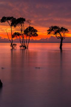 Sunrise over the mangroves, Queensland, Australia, by T Travel, on500px.