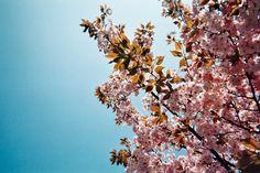 carnet-voyage-japon-appareil-photo-jetable-tokyo-by-le-polyedre