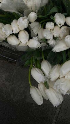 Classy Aesthetic, Beige Aesthetic, Flower Aesthetic, Travel Aesthetic, White Tulips, White Flowers, Fresh Flowers, My Flower, Aesthetic Pictures