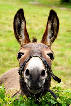 "The mule is just so perky looking, so happy looking, like he or she is saying ""Hi!  What's going on in your day!  I'm REALLY interested!"""