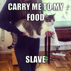 my cat wont let you pick her up unless you are going to her food bowl