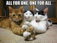 All for one, One for all www.superstarpetservices.com