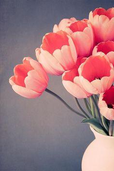 "Fine Art Flower Photography Print ""Tulip No. 14"""