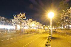 95:「高田の桜」@高田公園