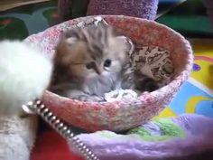 Chỉ là mèo con thôi mà sao đáng yêu quá vậy xo so http://xoso.wap.vn/kqxs-ket-qua-xo-so.html kqxsmb http://xoso.wap.vn/xsmb-ket-qua-xo-so-mien-bac-xstd.html xsmn http://xoso.wap.vn/ket-qua-xo-so-mien-nam-xsmn.html