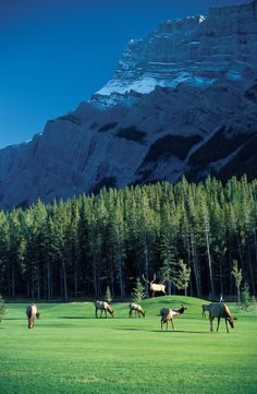 Golf in the Rocky Mountains-I'd learn to love golf just for this.