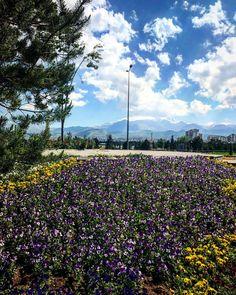 Şehri bazen sevmediğim doğru ama Erciyes çok başka������ #bugünbütünfotoğraflarıpaylaşacağım  #dağ #bayır #park #bahçe #çiçek #böcek #erciyesdağı #alidağı #kayseri http://turkrazzi.com/ipost/1525593402850140285/?code=BUr_x3wj-B9