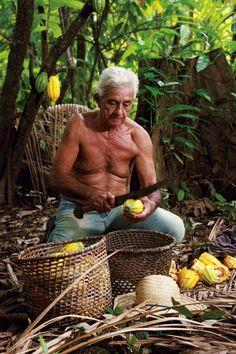 cacaobeans raw