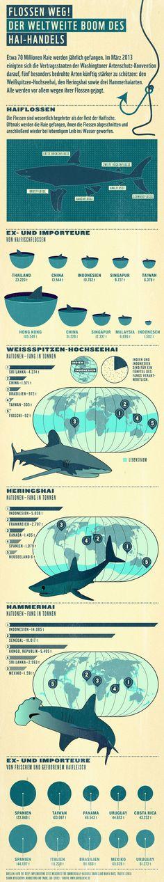 Haie zählen zu den erfolgreichsten Jägern unseres Planeten. Inzwischen hat sich aber das Blatt gewendet. Die Jäger sind zu Gejagten geworden. Sie sind begehrt wegen ihres Fleisches, ihrer Innereien und vor allem wegen ihrer Flossen. Mehr: http://www.wwf.de/haifischhandel