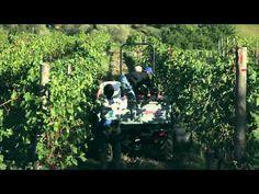 Fattoria di Fubbiano - Tuscan Winery - wine tasting - holiday villas and farmhouse in Lucca, Tuscany