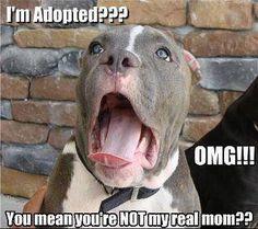 funny animal meme | Funny Animal Memes and Pics - Socialphy