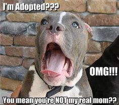HAHA! I feel like this is how Harleigh reacts every time I tell her the story of how she became my dog!