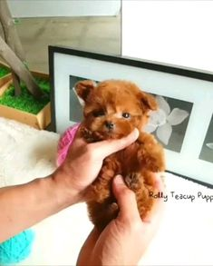 Cute and funny animals compilation, you have prepared for animal lovers. Cute Pets Funny Animals - Cutest Moments Of Pup. Cute Teacup Puppies, Cute Baby Puppies, Really Cute Puppies, Super Cute Puppies, Baby Animals Super Cute, Cute Little Animals, Dog Baby, Tiny Puppies, Teacup Puppy Breeds