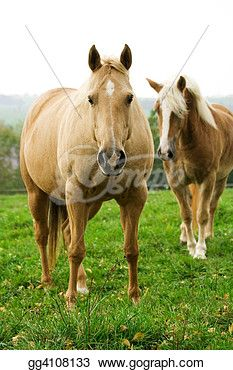 """beautiful Horses in field""- Horse Stock Photo from Gograph.com Beautiful Horse Pictures, Beautiful Horses, Horse Photos, Stock Photos, Animals, Animales, Horse Pictures, Animaux, Animal"