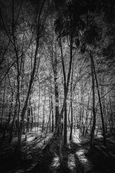 The final final black and white edit of the picture of the sunlight streaming through the trees in the New Forest - this really is the last post honest