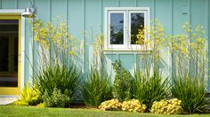 Succulents, grasses and low-water shrubs with vivid foliage give this coastal…