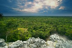 Endless jungle - Taken in Mexico from the pyramid in Coba.