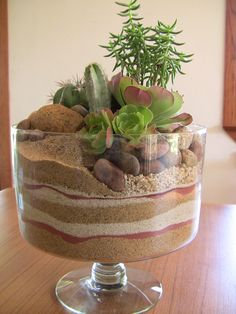 Discover thousands of images about Succulent trifle dish garden- Mini desert! Succulents In Containers, Cacti And Succulents, Planting Succulents, Cactus Plants, Planting Flowers, Air Plants, Cactus Terrarium, Garden Terrarium, Succulent Centerpieces