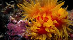 Download Wallpaper 3840x2160 Seaweed, Underwater, Ocean, Depth ...