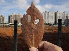 Yahui Wang, 'Leaf holes no.2 ,' 2011, TKG+ Sculpting, Artsy, Leaves, Artwork, Photography, Inspiration, Biblical Inspiration, Sculpture, Work Of Art