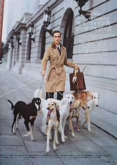 Model with a pack of salukis in a Japanese magazine. #saluki #sighthounds - quite the metrosexual man -