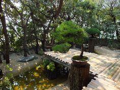 feel-feel-bonsai-en-ete-6