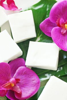 Haupia is a widely popular Hawaiian dessert that is smooth, creamy, and gelatin-like in texture. It's like little refreshing bites of Hawaii! Hawaiian Dessert Recipes, Hawaii Desserts, Haupia Recipe, Haupia Pie, Chamorro Recipes, Luau Food, Coconut Pudding, How To Make Pie, Unsweetened Coconut Milk