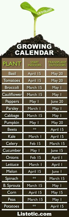 Plant Your Vegetable Garden ⋆ Listotic Vegetable garden growing calendar with starting and transplanting dates. If only I had a green thumb.Vegetable garden growing calendar with starting and transplanting dates. If only I had a green thumb. Veg Garden, Garden Types, Lawn And Garden, Terrace Garden, Vegetable Gardening, Veggie Gardens, Vegetables Garden, Potager Garden, Garden Planters