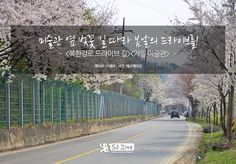 미술관 옆 벚꽃 길 따라 봄날의 드라이브를! | Special Journey sjzine